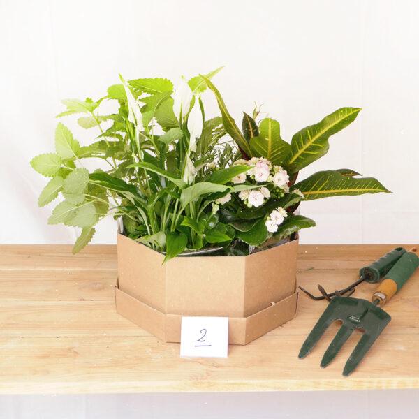 Conjunt de plantes aromàtiques i interior