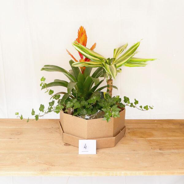 conjunt plantes interior